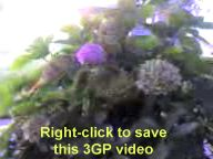 right-click to save the camera video