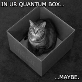 Schrodinger's LOLcat.
